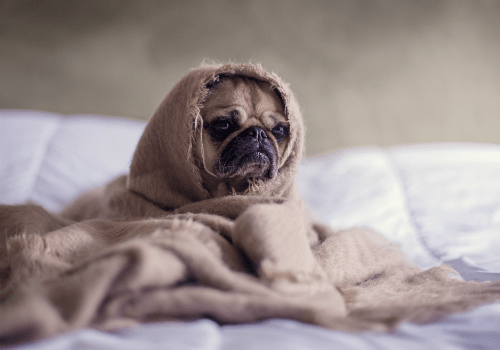 Is your home making your dog sick?